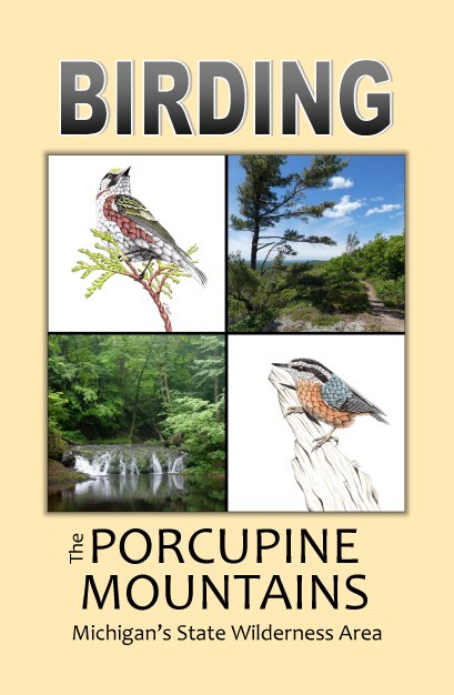 Birding in the Porcupine Mountains
